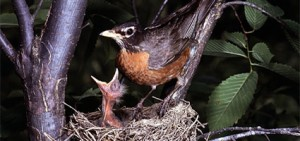 nature-birds