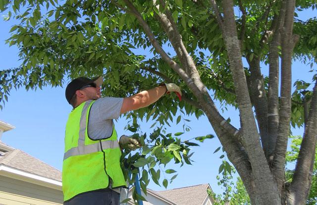 tree-trimming-staff