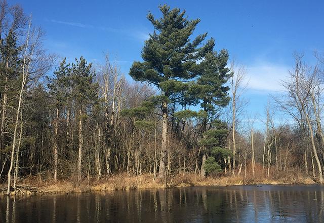 Dublin, Ohio, USA » Brandon Park Pond Restoration